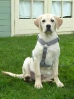 Luxury Woollen Dog Harness