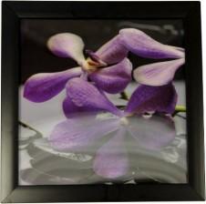 Iconic 3D Spa Violets